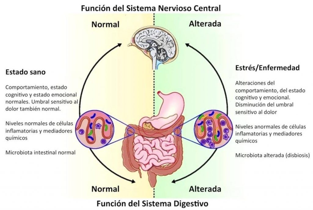 causas del intestino irritable